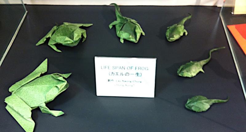 Frog Shoulders